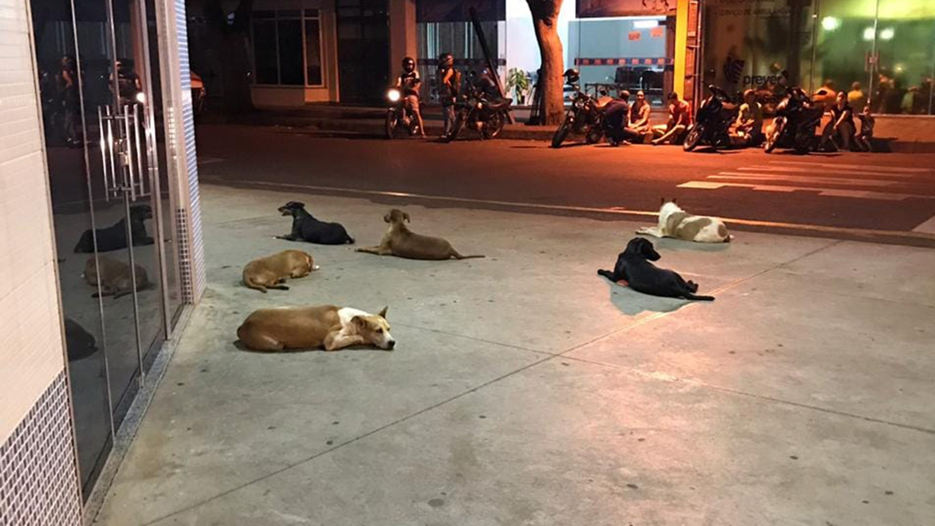 The six loyal pups of a homeless man in Brazil waited outside a hospital for more than 24 hours after he suffered a stroke.