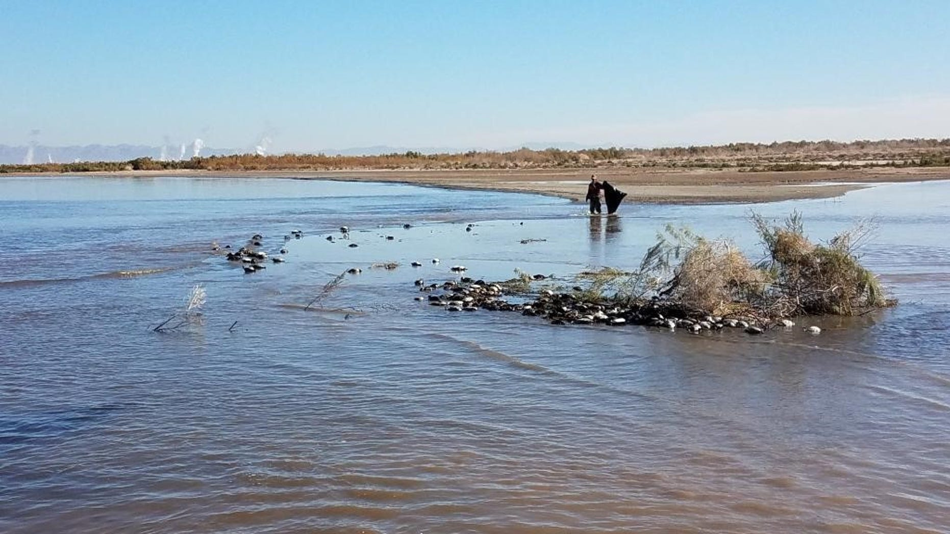 California wildlife officials said thousands of water birds died of an avian cholera outbreak at the Salton Sea between Jan. 8-17