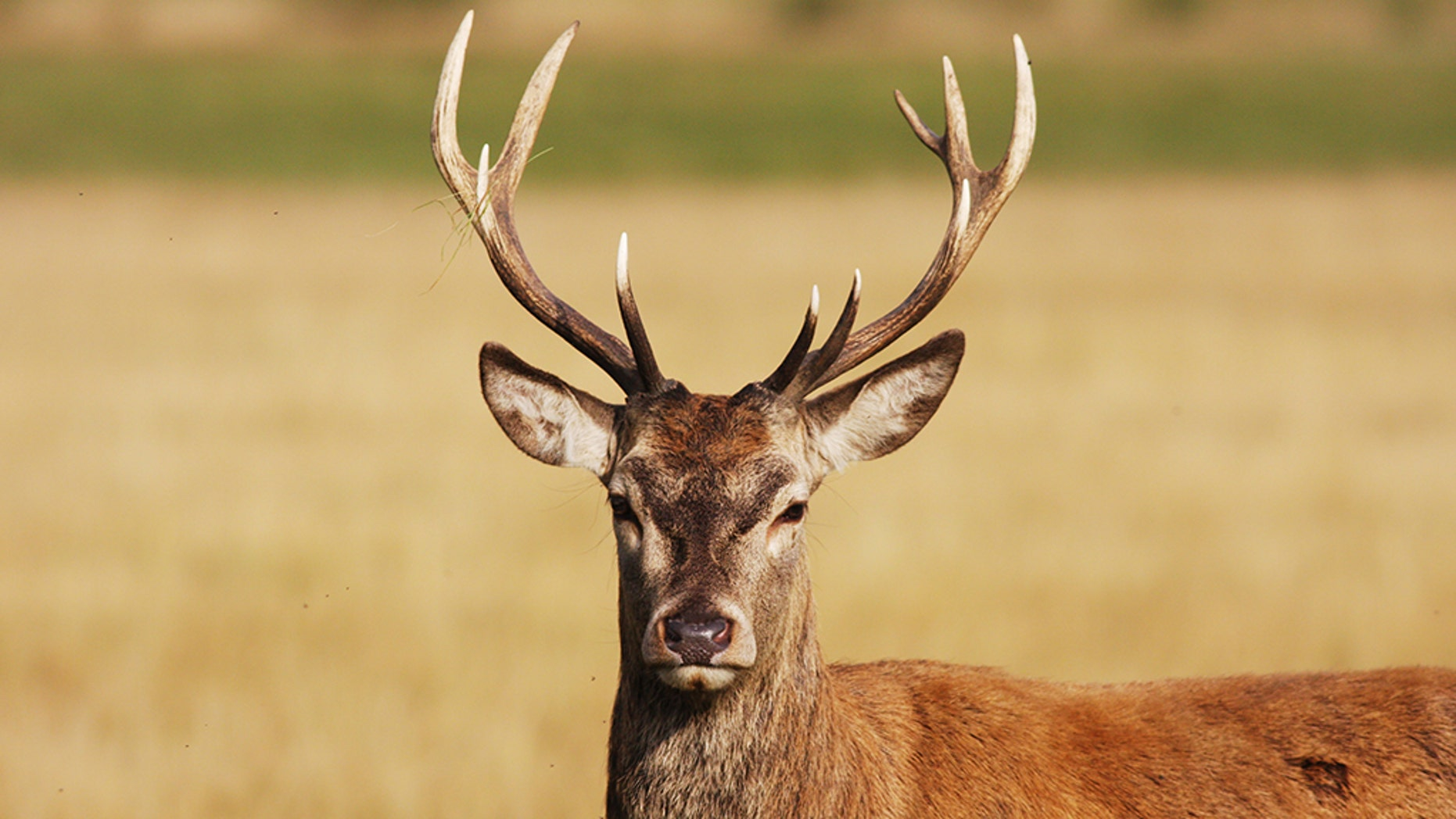 Nearly 300,000 deer were bagged in total.