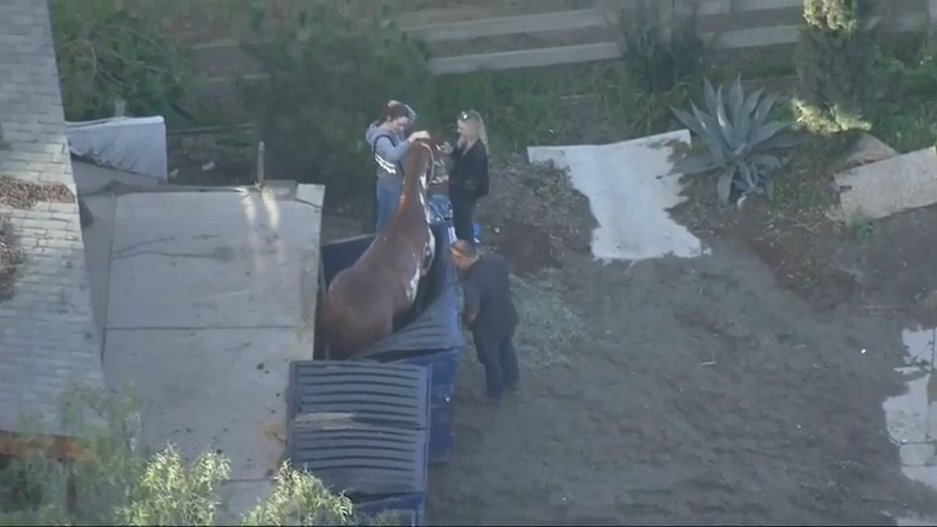 A horse was rescued after getting trapped in a dumpster in California on Friday.