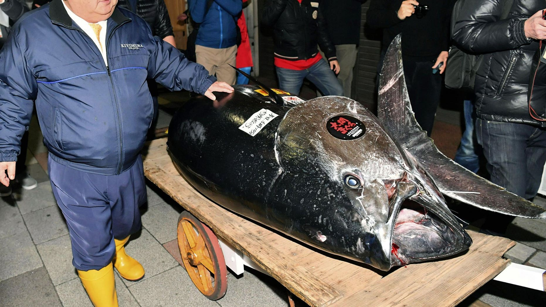 Japanese bluefin tuna sold at auction for record $4.4m