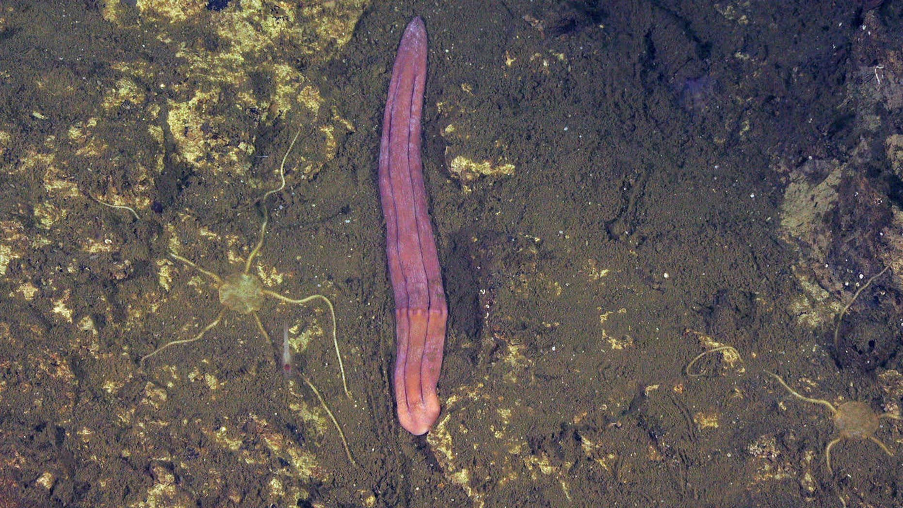 A new class of Xenoturbella was detected in Costa Rica during a new expedition.