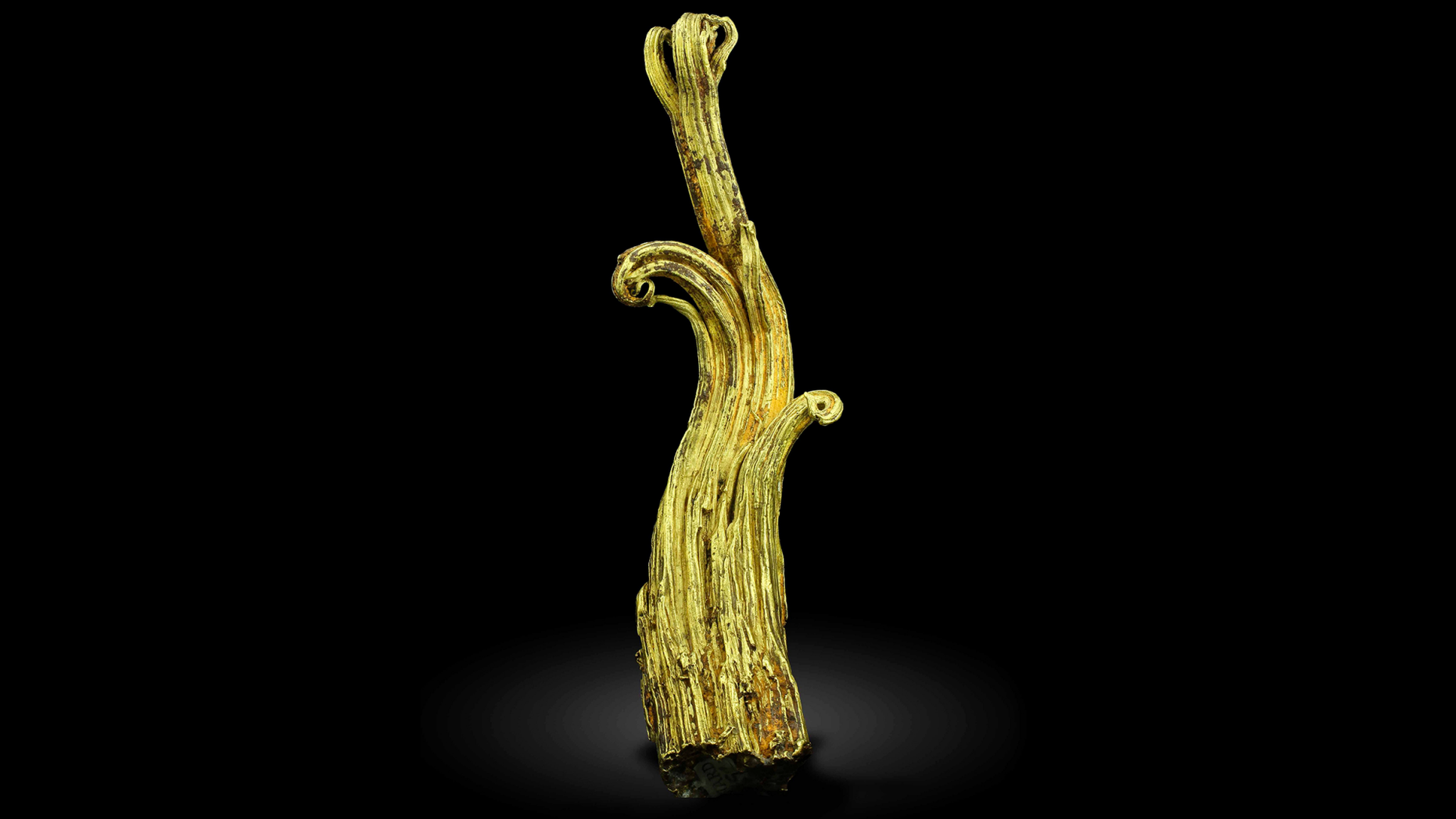 "This undated image provided by the Mineralogical and Geological Museum of Harvard University shows a rare gold specimen called the ""Ram's Horn."" A team of scientists used neutrons from a particle accelerator at Los Alamos National Laboratory in New Mexico to learn more about the specimen's structure and formation process. (Mineralogical and Geological Museum of Harvard University via AP)"