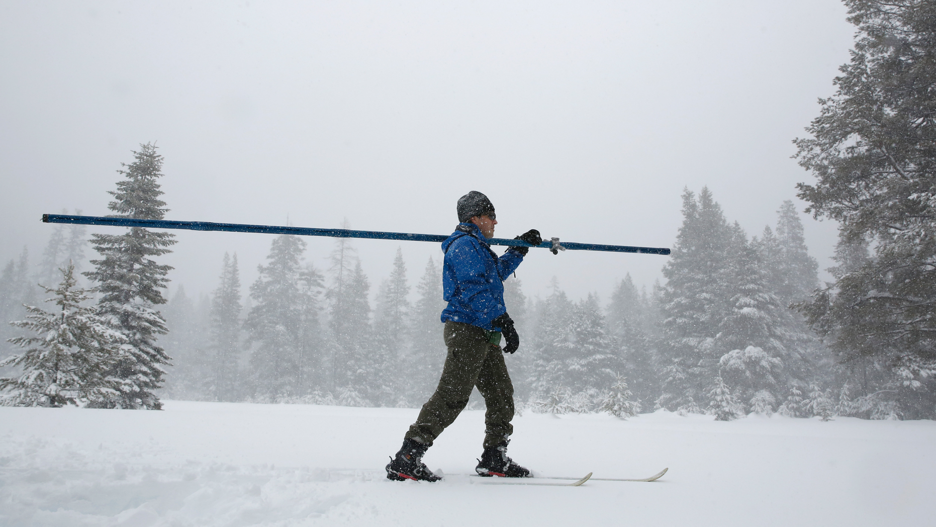 The snow falls as John King of the Department of Water Resources crosses a meadow while conducting the third snow manual survey of the season at Phillips Station near Echo Summit, California, on Thursday, February 28, 2019. survey revealed that the 113-inch depth with a snow water equivalent of 43.5 inches at this location at this time of year. (AP Photo / Rich Pedroncelli)