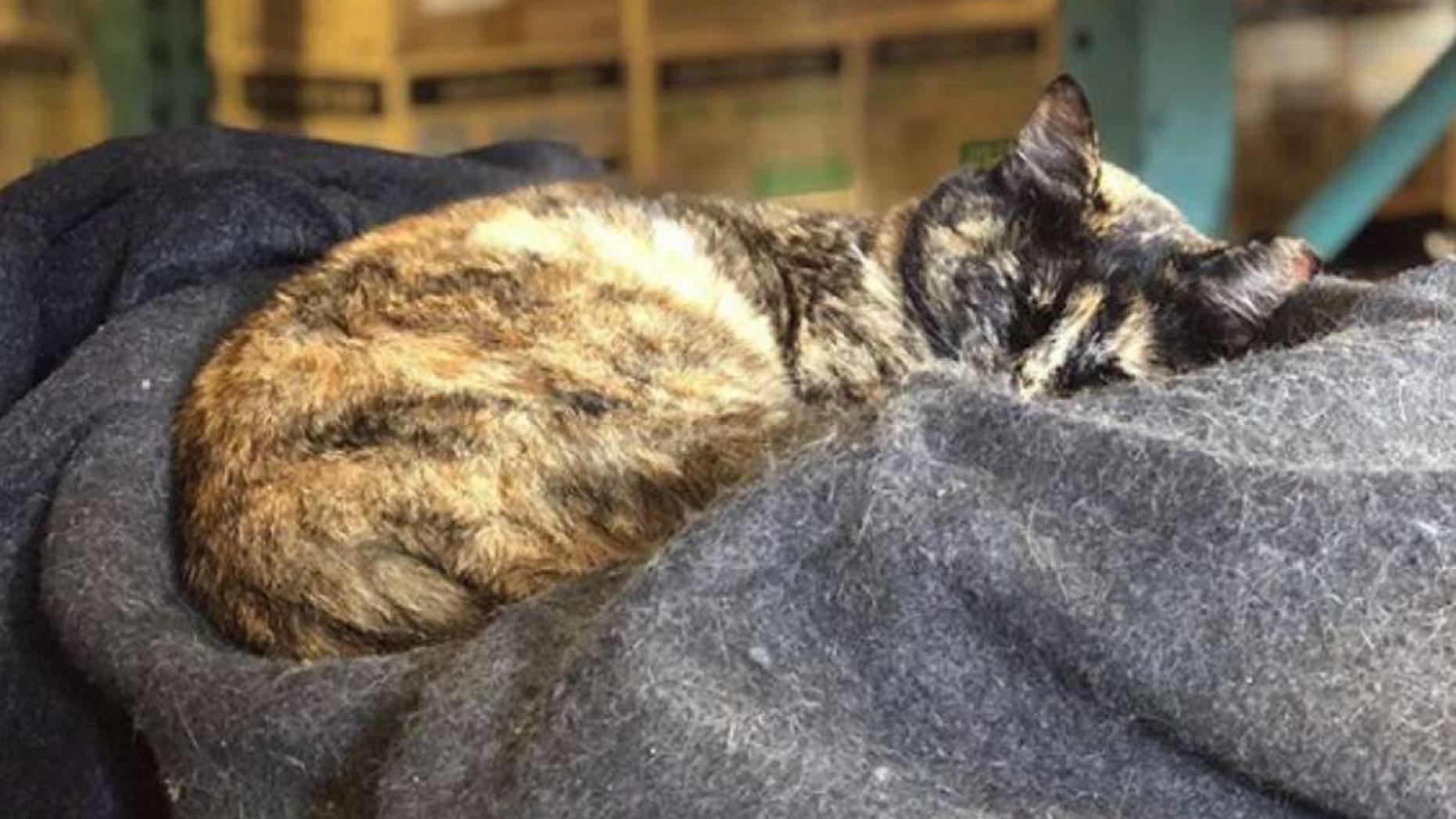 彼女が医療機器の周りにいることについての匿名の苦情を受けた後、猫、エドナはサンフランシスコ消防署のステーション49から追い出されました。