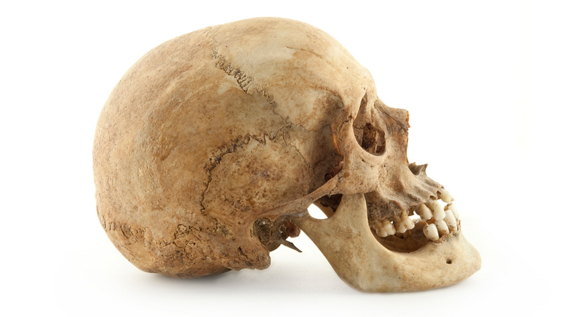 A human skull was discovered in a remote, wooded area near Tuscaloosa, Alabama