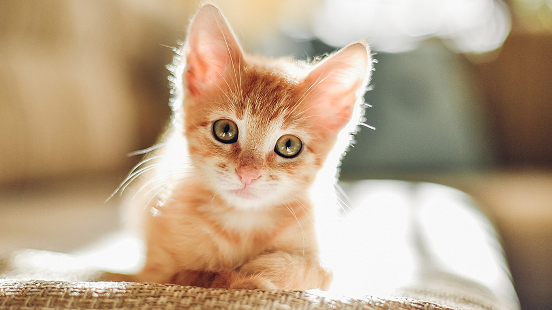 A kitten bite led to a nearly $50,000 medical bill for one Florida woman. (iStock)