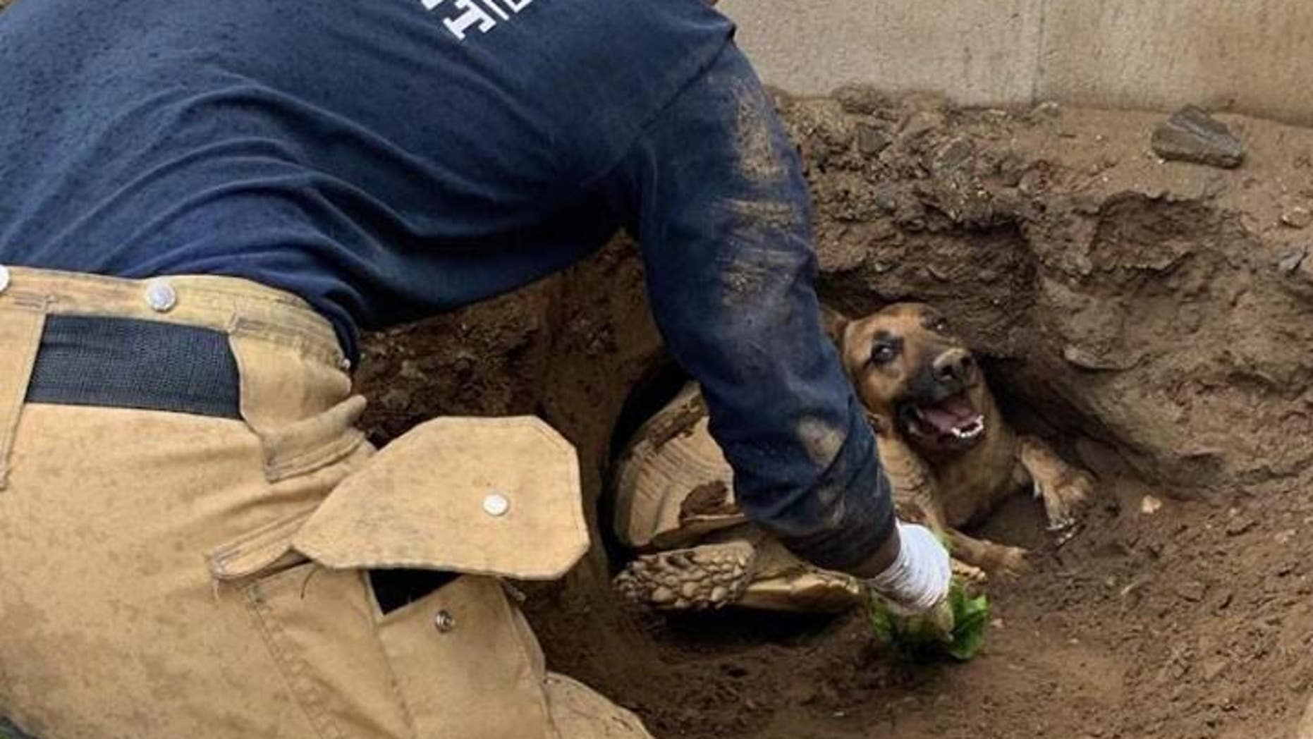 California firefighters on Wednesday came to the rescue of a 70-pound tortoise named Godzilla and a dog named Taylor who got trapped in a tunnel, officials said.