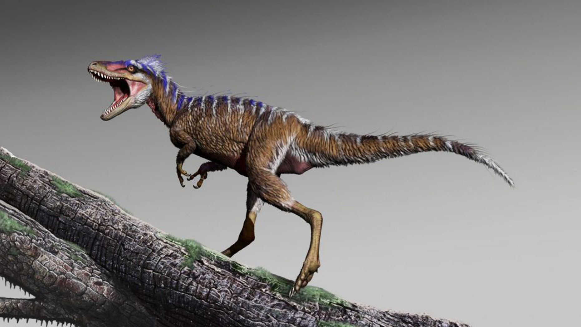 4-foot-tall T. rex cousin discovered, was a 'harbinger of doom'