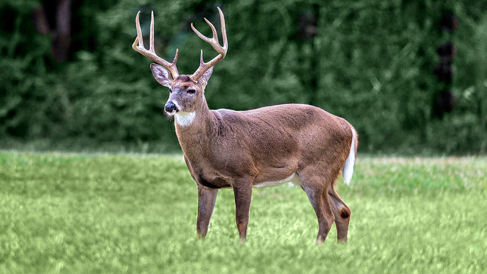 'Zombie deer' disease reported in Kansas, 23 other states
