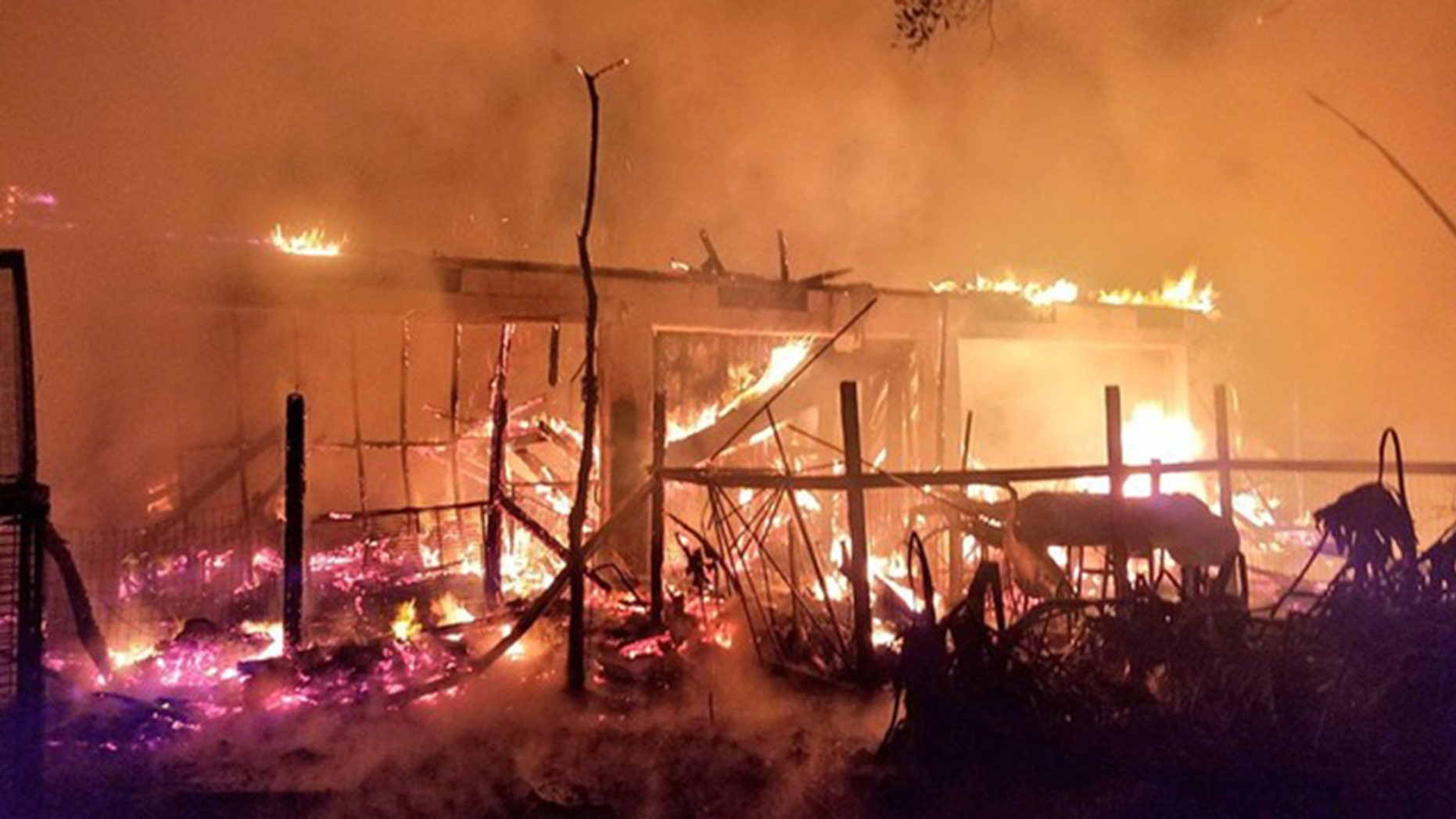 A fire at a wildlife sanctuary in Orange County, Fla., killed 33 animals and birds.
