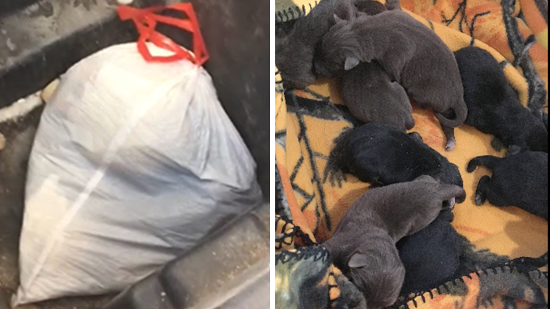 Police in Marshfield, Wisconsin discovered eight newborn puppies that were thrown out with the trash last month.