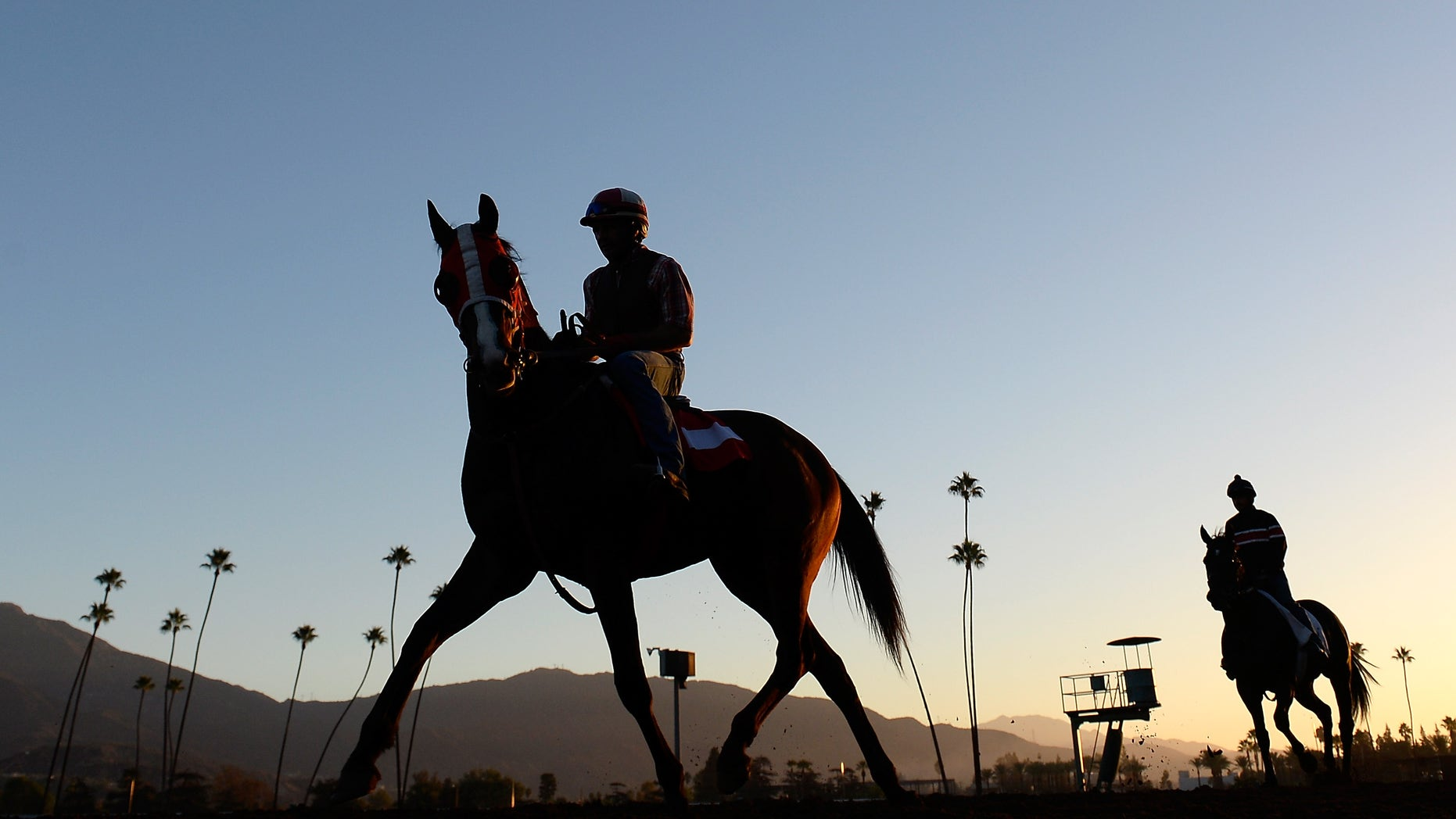 Horses training in credentials for a 2014 Breeder's Cup during Santa Anita Park on Oct. 29, 2014, in Arcadia, California. (Harry How/Getty Images, File)