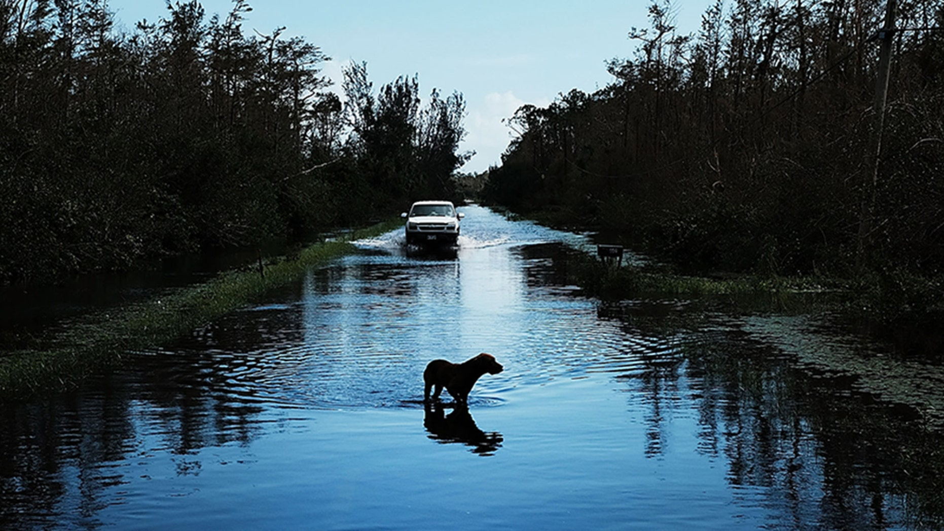 The Florida Senate Agriculture Committee on Monday approved a bill that would punish those who leave their pets chained up or unattended during natural or manmade disasters.