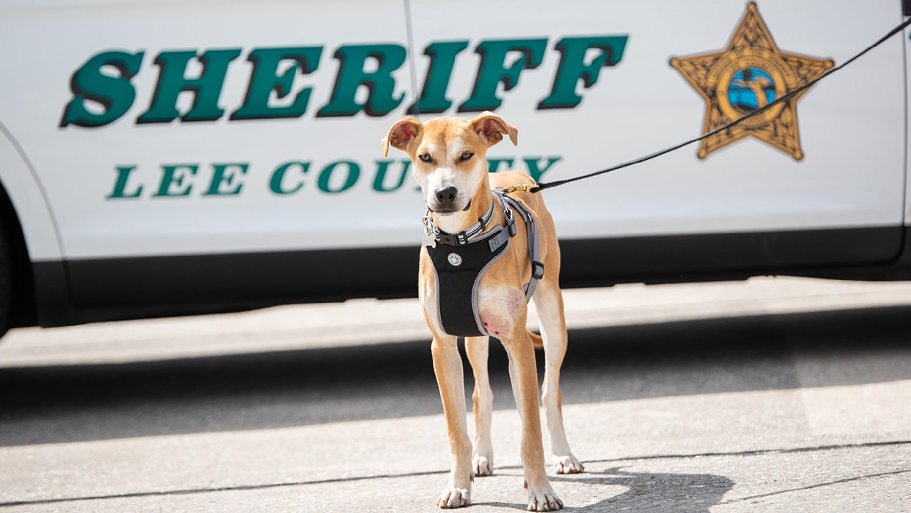 Chance, the male Florida cur found bloodied and abused last month, has been adopted by a Florida sheriff and made into a deputy.