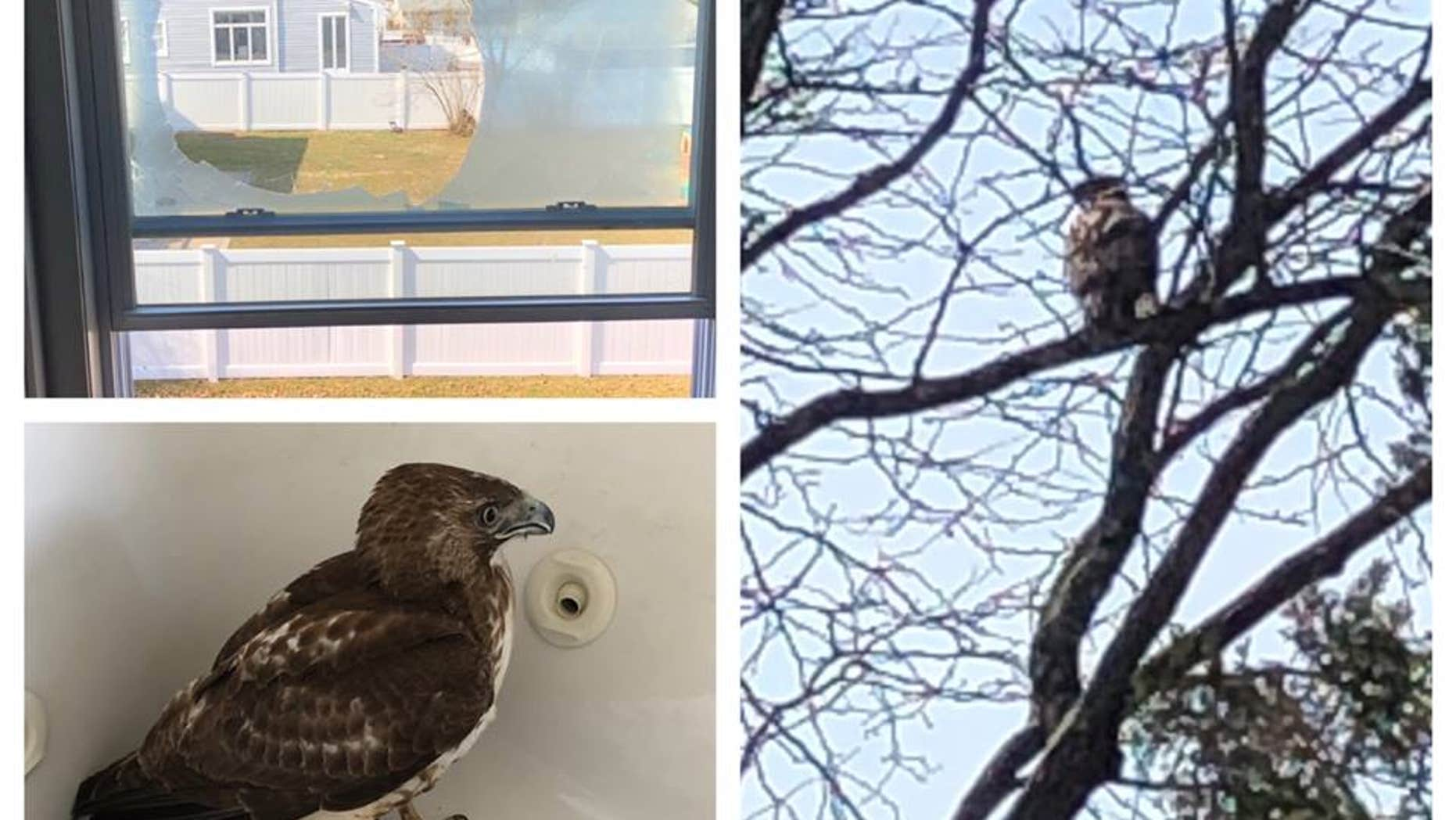 A hawk took flight this week straight into a New Jersey home and wound up in an unusual place, police said.