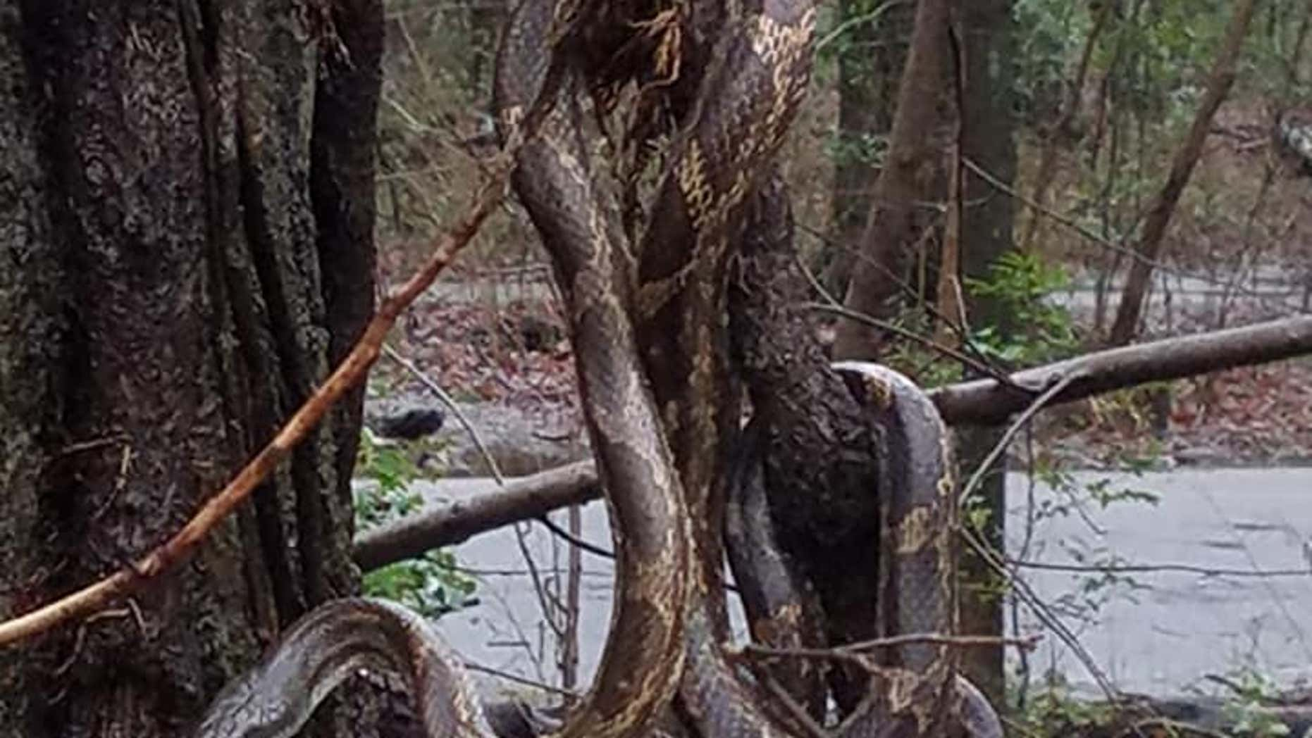 Steve Ballou said the snake appears larger in the photo than it really was. (Photo courtesy of Steve Ballou)