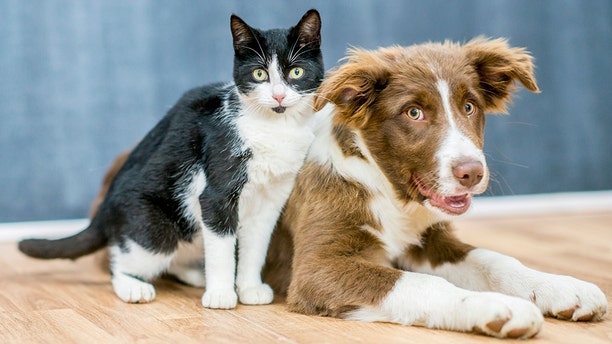 The study surveyed more than 3,000 cat and dog owners.