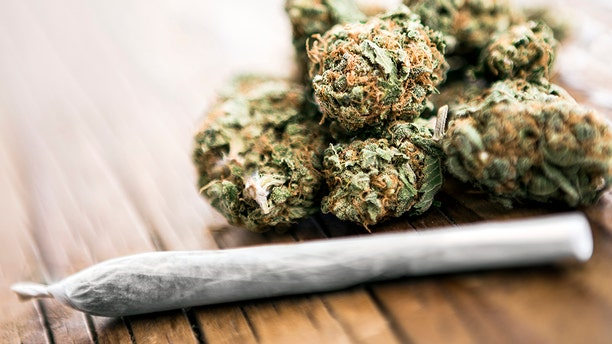 Cannabis sold by street dealers in Spain has been found to be contaminated with feces, according to a study published in the journal Forensic Science International.