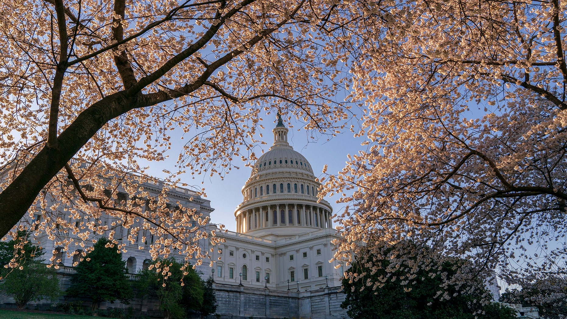The Capitol is framed amid blooming cherry trees in Washington, Monday, April 1, 2019. (AP Photo/J. Scott Applewhite)