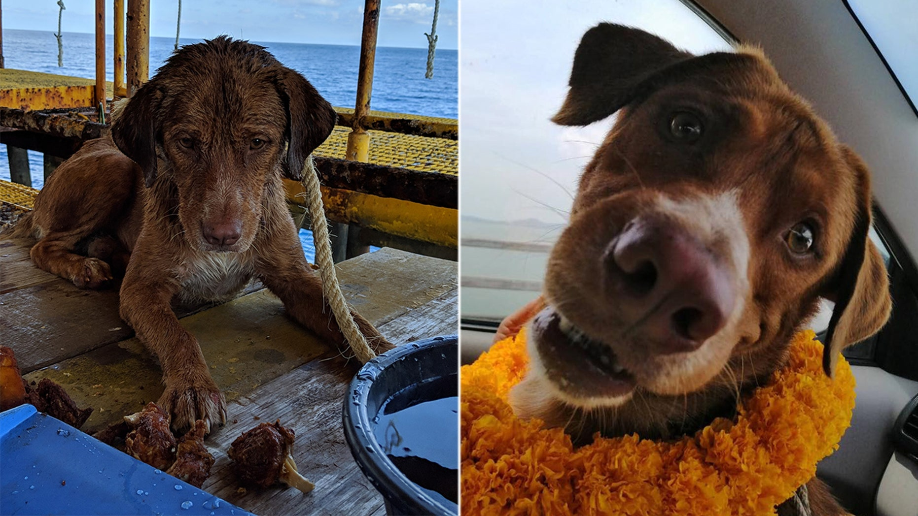 """""""Boonrod"""" was rescued by workers on an oil rig after she was spotted paddling some 130 miles from shore on Friday."""
