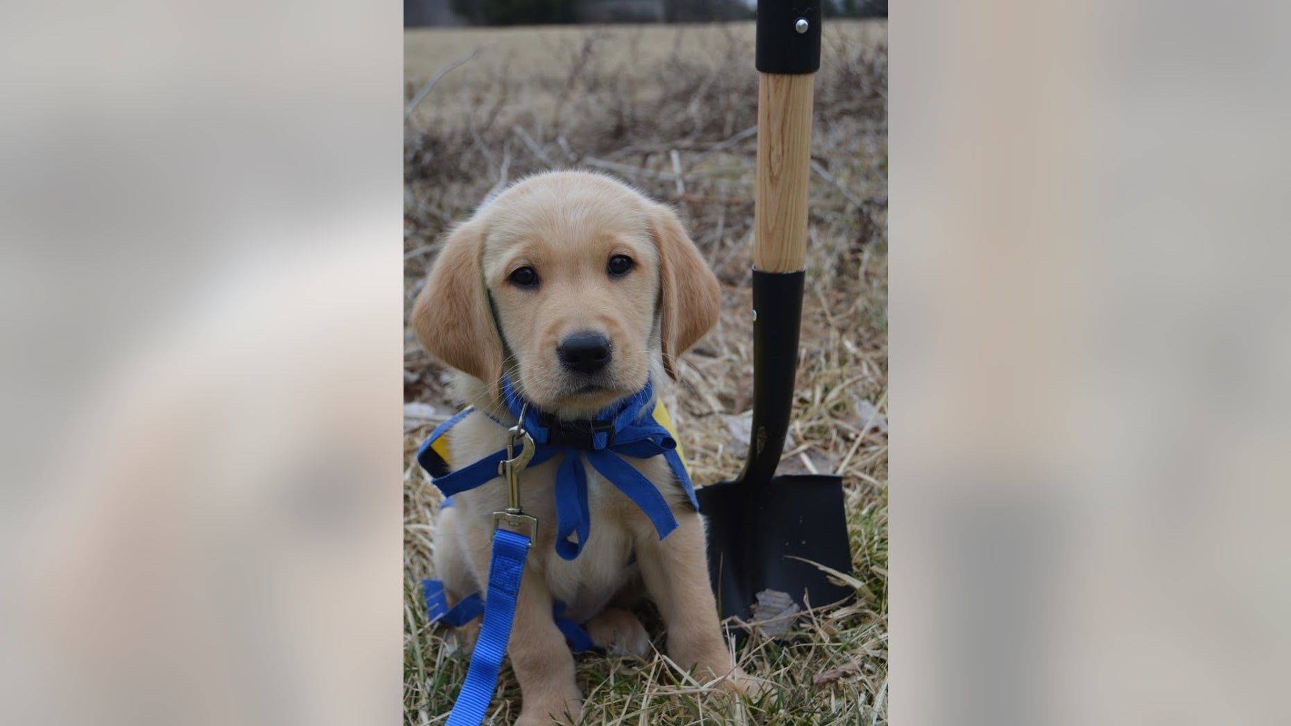 A new CCI facility inNew Albany, Ohio,will include dorms where the graduates can stay while they learn how to work with their new service dogs.