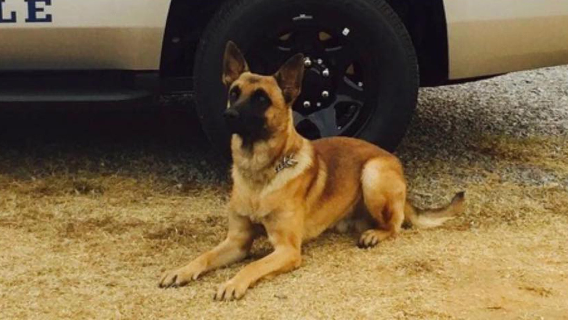Westlake Legal Group Knoxville-PD-K9 Tennessee K-9 bites, brings down carjacking suspect, cops say Frank Miles fox-news/us/us-regions/southeast/tennessee fox-news/us/personal-freedoms/proud-american fox-news/us/crime/robbery-theft fox-news/us/crime/police-and-law-enforcement fox news fnc/us fnc article 984c1acb-dfc3-5a69-8c09-44e798716088