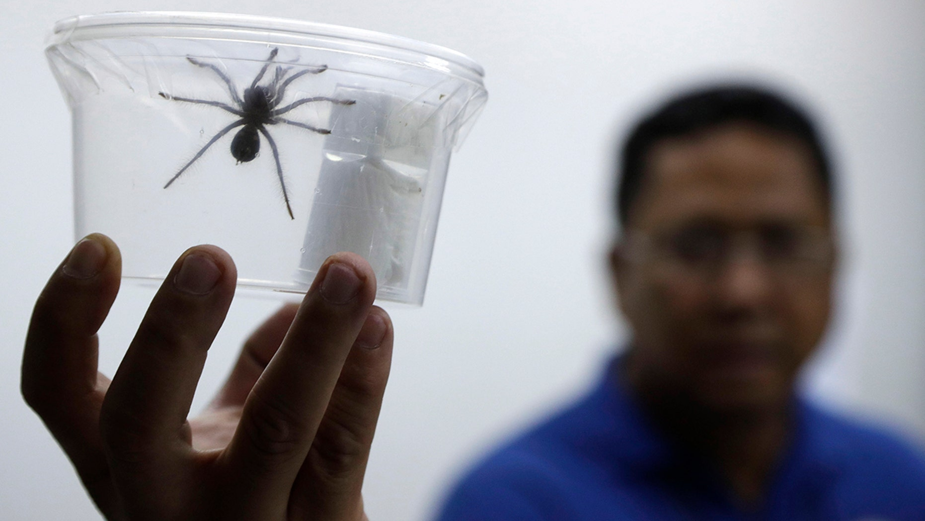 Philippine customs officials found 757 tarantulas inside gift-wrapped boxes of cookies and oatmeal at a mail exchange center near Manila's international airport on Monday. (AP Photo/Aaron Favila)