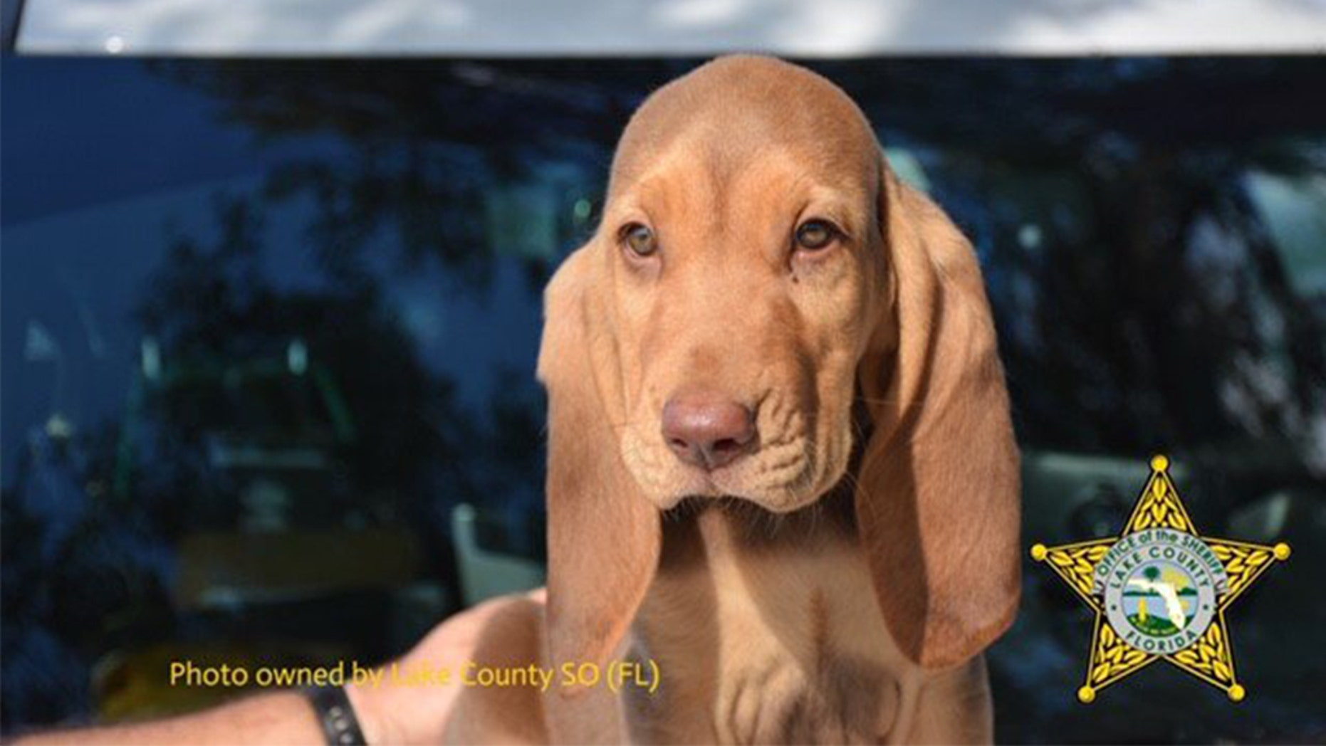 """""""Rommel"""" the bloodhound was renamed after people complained the dog shared its name with a general who served under Adolf Hitler."""
