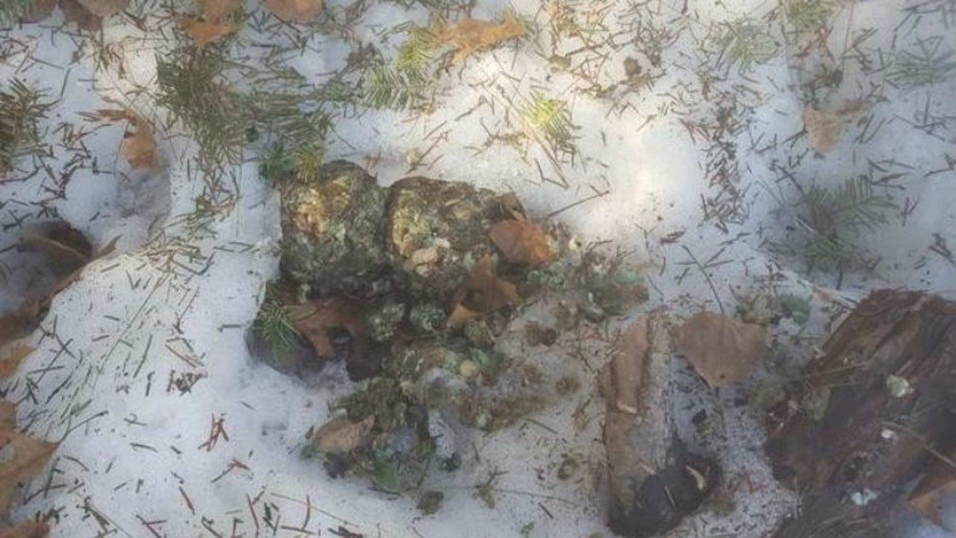 Image of possible poison used to kill wildlife in northern Wisconsin