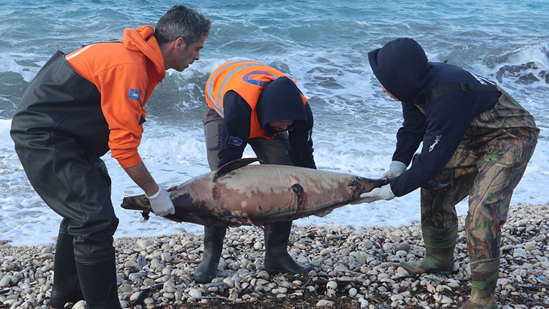 Archipelagos Institute of Marine Conservation members carry a dead dolphin at a beach on Greece's Samos island in February.
