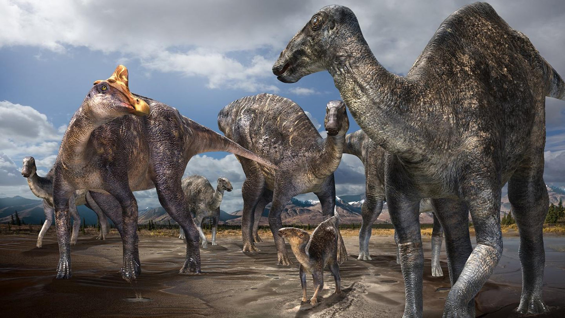 File photo: Paleontologists from Hokkaido University in Japan, in team-work with paleontologists from a Perot Museum of Nature and Science in Dallas, Texas, have detected a initial reliable occurrence of a lambeosaurine (crested 'duck-billed' dinosaur) from a Arctic. (Credit: Masato Hattori)