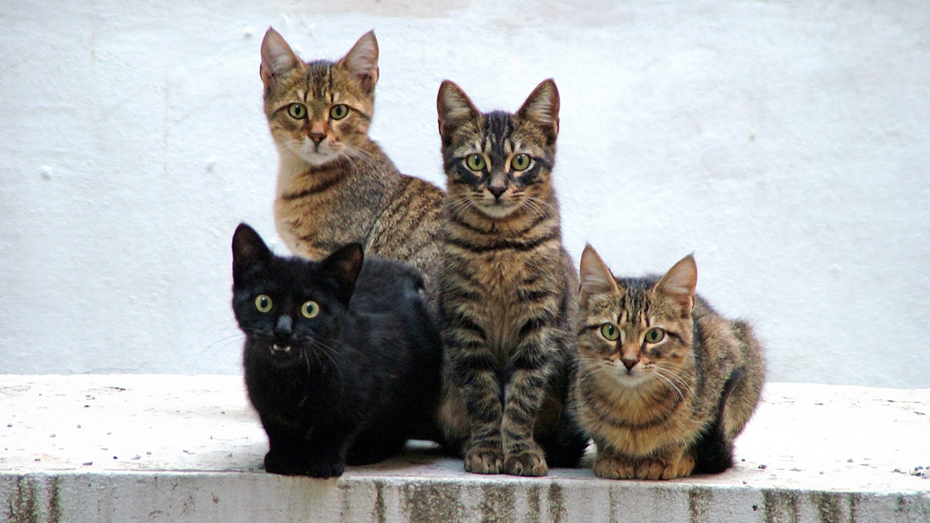 Both kittens and cats would be used in the testing process.