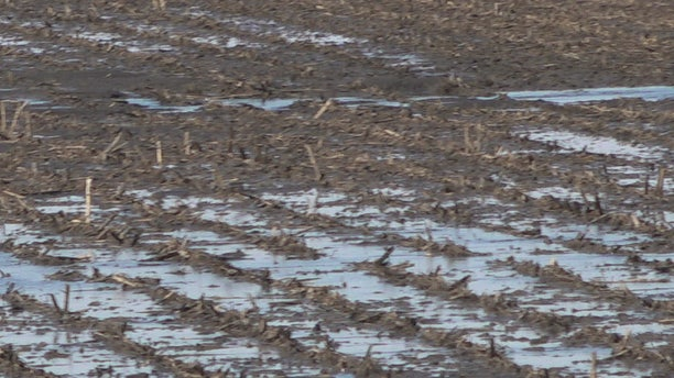 Flooded fields in Sidney, Iowa following historic flooding in Midwest.