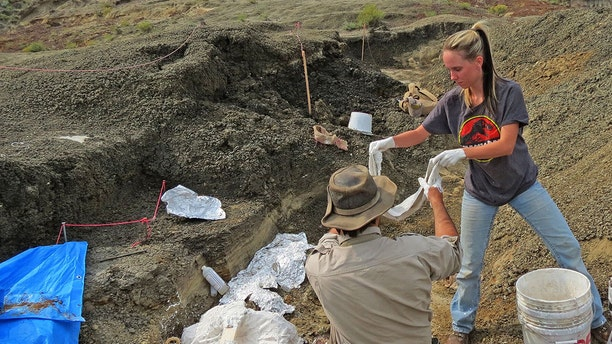 This handout photo obtained March 30, 2019 courtesy by the University of Kansas shows Robert DePalma(L)and field assistant Kylie Ruble(R) excavate fossil carcasses from the Tanis deposit (Credit: ROBERT DEPALMA/AFP/Getty Images)