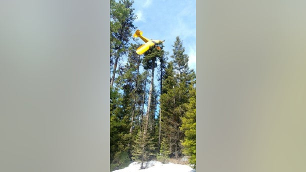A small airplane crashed on top of a tree when the aircraft lost power.