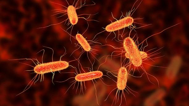 Escherichia coli bacterium, also known as E.coli.
