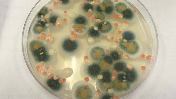 An investigation of microbes and fungi taken from the space station reveals microorganisms similar to those found in busy public spaces on Earth.