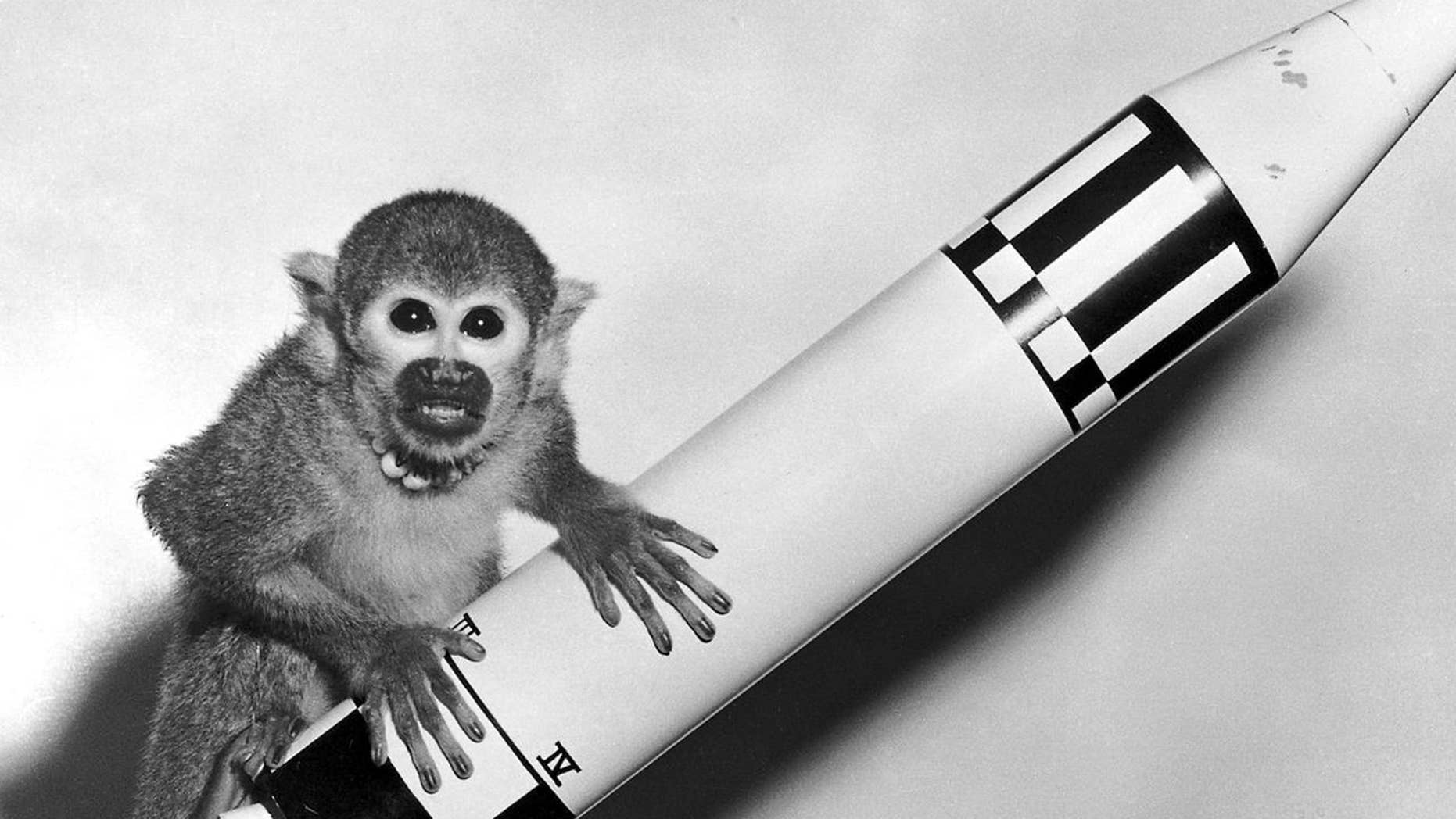 Two female monkeys went to space 60 years ago. One became the poster child for astronaut masculinity