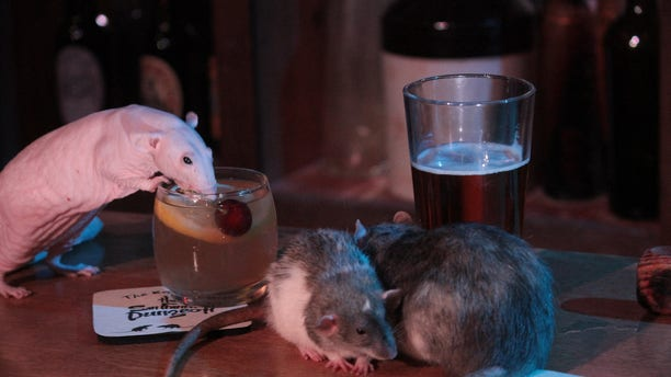 """The tourist hot spot known for its interactive tours through history, featuring live actors and thrilling special effects, is opening its Rat Bar as the """"next iteration of what the Department of Public Health"""" will allow, according to a press release."""