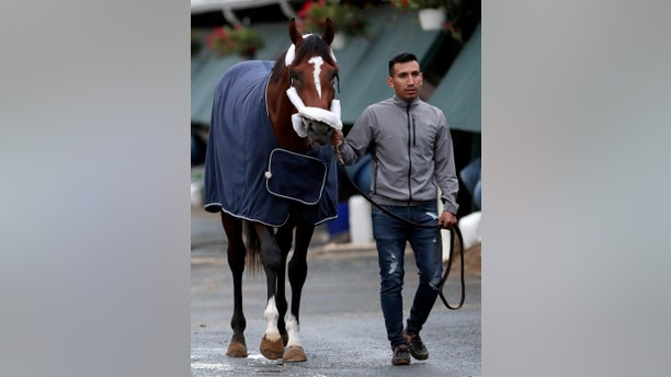 Maximum Security, the horse disqualified from the Kentucky Derby horse race, is led to a grooming station after being hot walked by Edelberto Rivas after the horse's arrival at its home barn at Monmouth Park Racetrack, Tuesday, May 7, 2019, in Oceanport, N.J. (AP Photo/Julio Cortez)