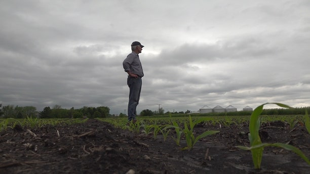 Illinois farmer Paul Jeschke looks out on his corn crop. The wet season has prevented him from planting 90 percent of his corn crop.