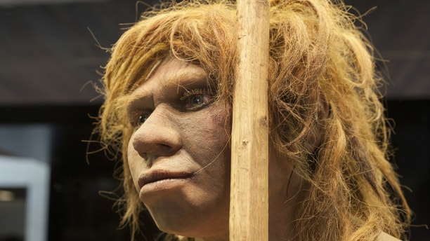A sculpture of a Neanderthal woman located at the National Archaeological Museum of Madrid. New research suggests just a 2% drop in fertility rates could have driven Neanderthals to extinction.