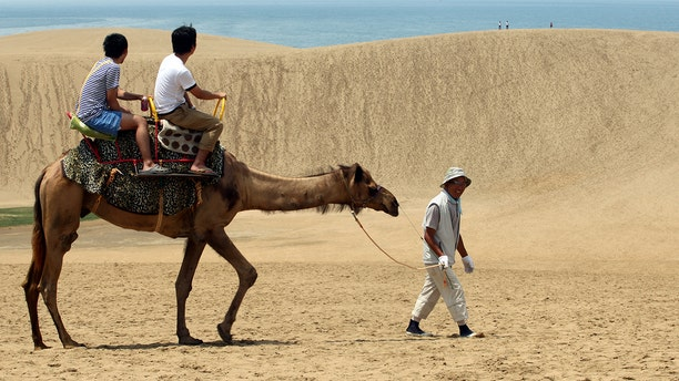 Tourists take a camel ride on Tottori sand dunes in Tottori, Japan.