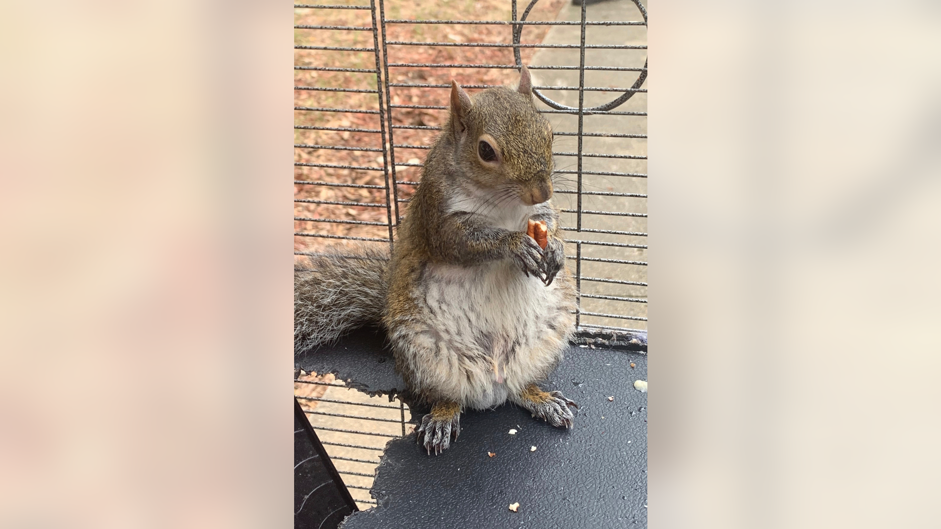 Westlake Legal Group ContentBroker_contentid-0bf01a6df57b4bd1aef139a3cc0daf03 Authorities: Alabama man fed meth to caged 'attack squirrel' fox-news/us/crime fnc/us fnc de1203a6-c850-5dfa-a393-24e5d0efe40a ATHENS, Ala. Associated Press article