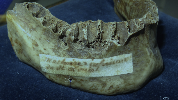 An image of the jaw shows an 18th Century parchment attached identifying it as belonging to Louis IX.