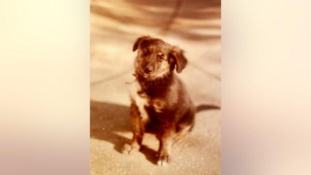 Daisy as a puppy