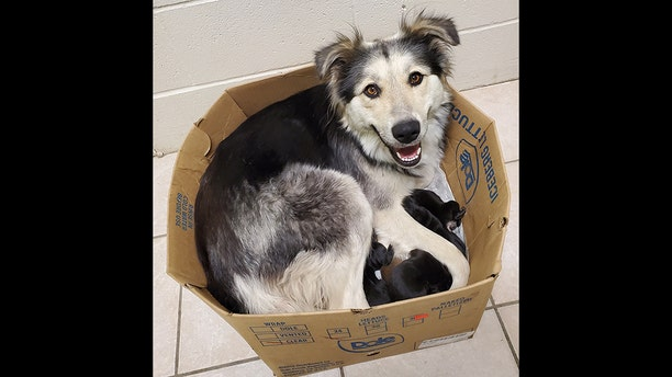 """Casey has been """"focusing on caring for her babies"""" since they were discovered in the box last week, according to animal rescuers."""
