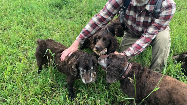 John Rucker of Montana with his dogs at Nachusa Grasslands in Franklin Grove, Illinois looking for ornate box turtles. (FOX NEWS/ MITTI HICKS)