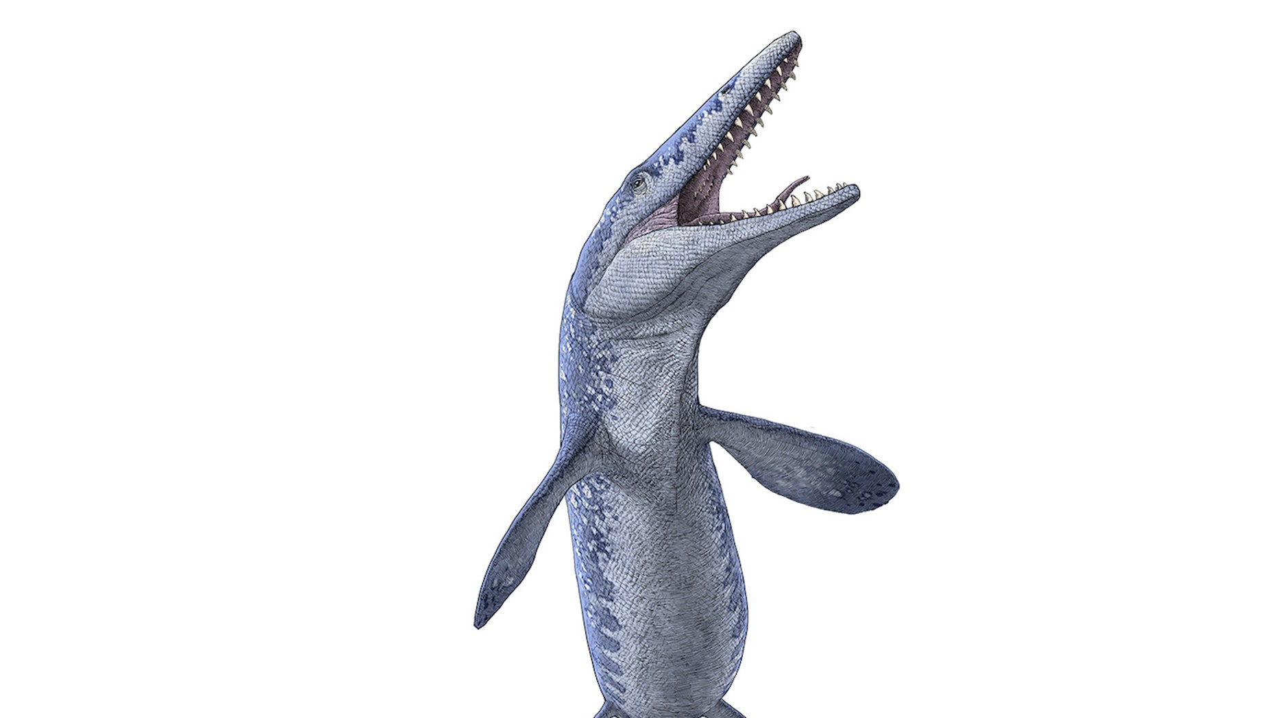 An painting of Tylosaurus, a mosasaur that lived during a dinosaur age.